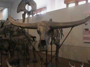 museum333